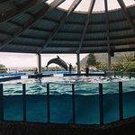Photo de Sea Life Park Hawaii