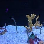 Photo of Shanghai Ocean Aquarium
