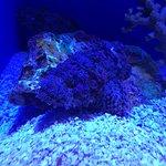 Shanghai Ocean Aquarium Foto