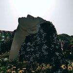 Dubai Miracle Garden, colourful and peaceful