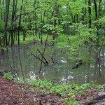 Natural forested wetland along Jordan River between Musical Arts Center and IU Auditorium