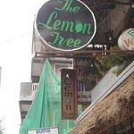 Photo of Lemon Tree