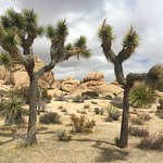 Joshua Tree National Park - well worth a visit if you have the time.