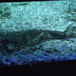 Foto de Aquarium Sea Life Benalmádena