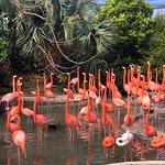 Bermuda Aquarium, Natural History Museum & Zoo resmi