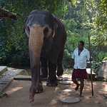 Photo de Millennium Elephant Foundation