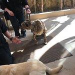 Foto de San Diego Zoo Safari Park