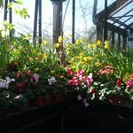 Flowers in one of the greenhouses