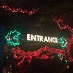 Some zoo lights