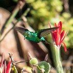 Foto de Curacao Zoo