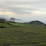 Photo de Gorreana Tea Plantation