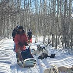 5 to 6 dogs by sled