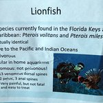 some information about lionfish