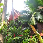 Delightful tropical gardens