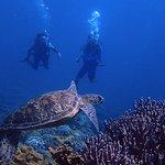 Plongée sous-marine et avec tuba