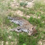 Foto Nkorho Bush Lodge