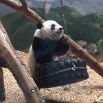 Photo of Zoo Atlanta