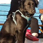 Bailey the boat dog. He's very friendly.