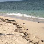 Photo of Turtle Island Park