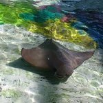 Foto de SeaWorld Orlando