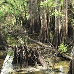 Foto de Six Mile Cypress Slough Preserve