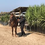 Yiannis' Guide Horse Melina is now available for advanced riders.