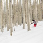 Secret stashes of powder in the Tiehack trees