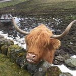 Photo of The Hairy Coo - Free Scottish Highlands Tour