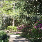 Bellingrath Gardens and Home의 사진
