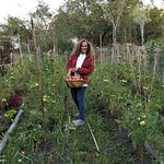 Chef Patricia gathering fresh tomatoes from her wonderful garden.