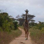 Photo of Safari Kenya Magique