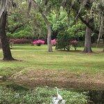 Photo of Jungle Gardens