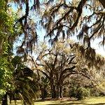 Foto van Goodwood Museum and Gardens