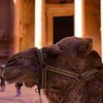 Hidden behind a camel