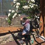 Photo of Berkeley Municipal Rose Garden
