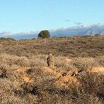Photo of Meerkat Adventures