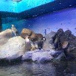 Photo of Ubatuba Aquarium