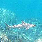 صورة فوتوغرافية لـ Shark Bay