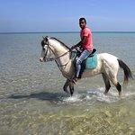 Photo of Horse Riding Hurghada