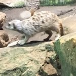 Be sure to ask why there are meerkats in an aquarium -- interesting story!