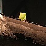 Fascinating leaf-cutter ant exhibit.