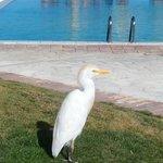 Mercure Hurghada Hotel Foto