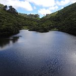 View of the central lake around which Zealandia is laid out.