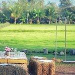 Bilde fra Naya Farm Bar & Grill