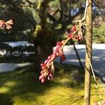 Foto de Portland Japanese Garden