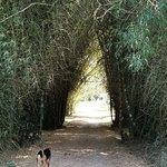 Maggie walking through the Bamboo