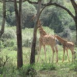 Find out about the breeding program to save the species.