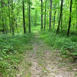 A trail at Punderson State Park