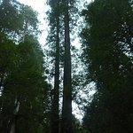 Foto de Muir Woods National Monument