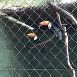 Photo of Zoologico de Americana